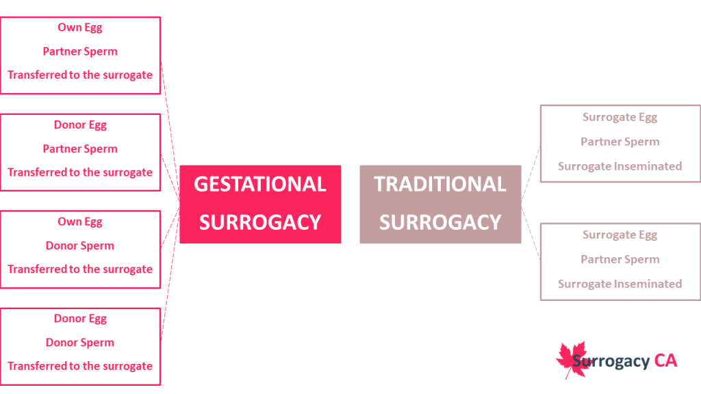 Gestational Surrogacy vs Traditiona Surrogacy